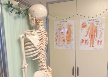 骨格モデルと解剖イラスト画像